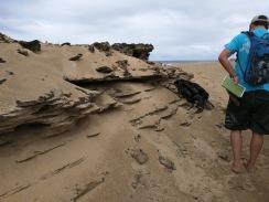 Duna de arena de formación reciente en playa de Isabela.